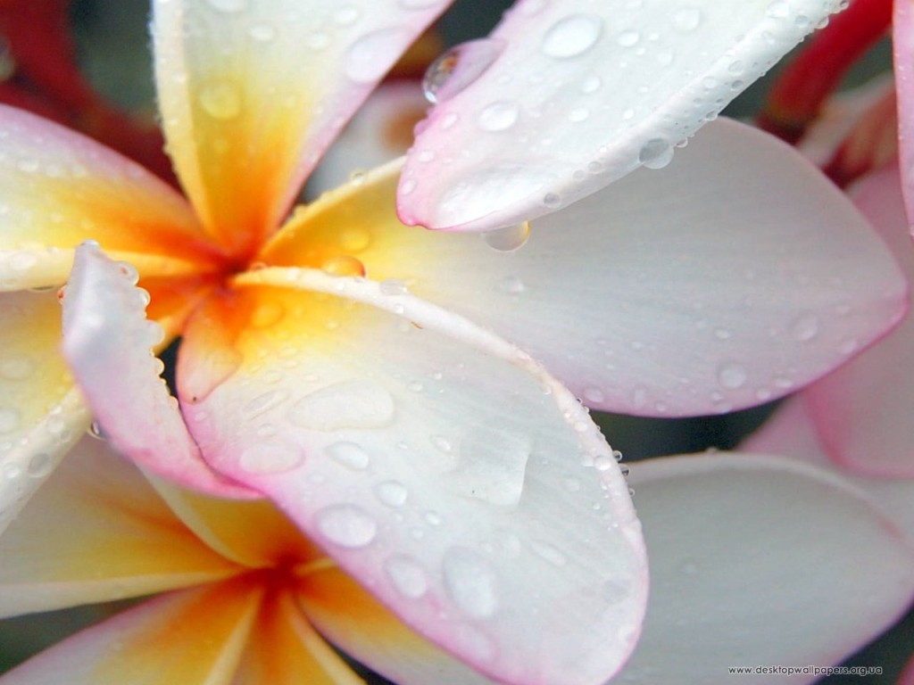 flowers_109_1280x1024_2_download-multimedia_com