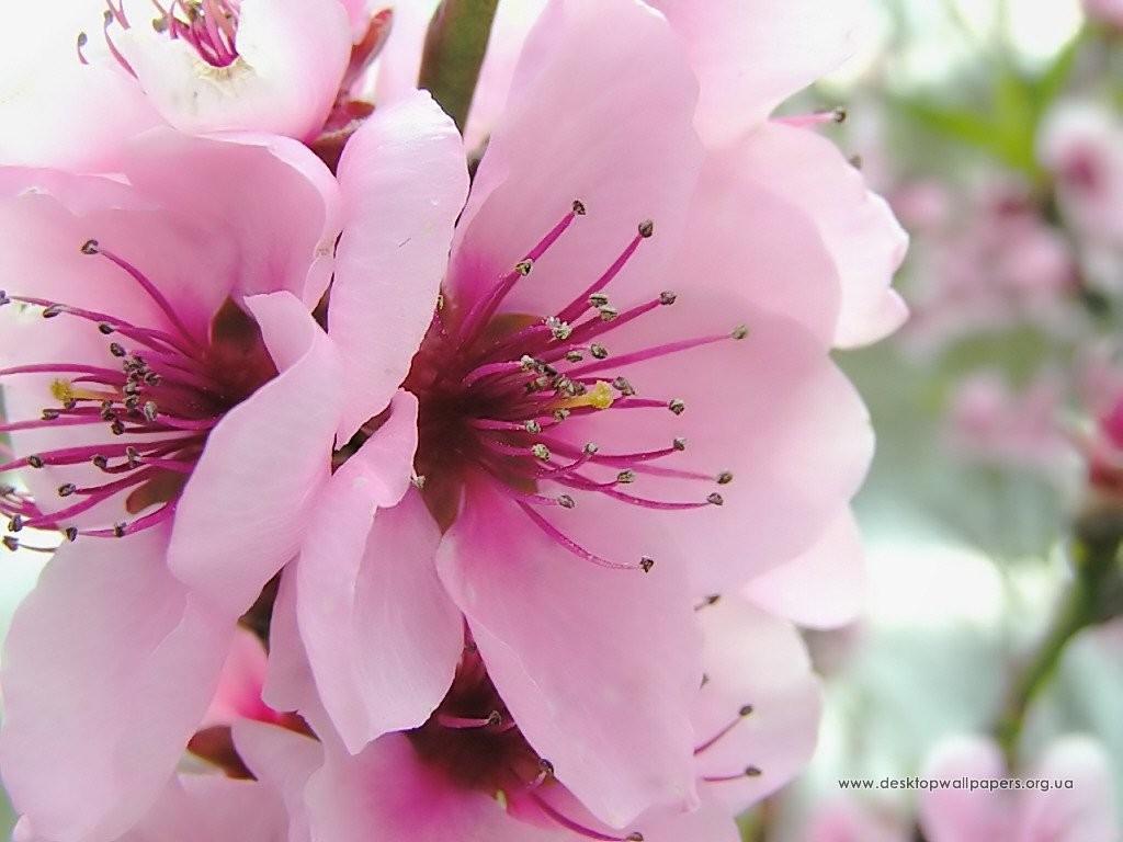 flowers_133_1024x768_2_download-multimedia_com
