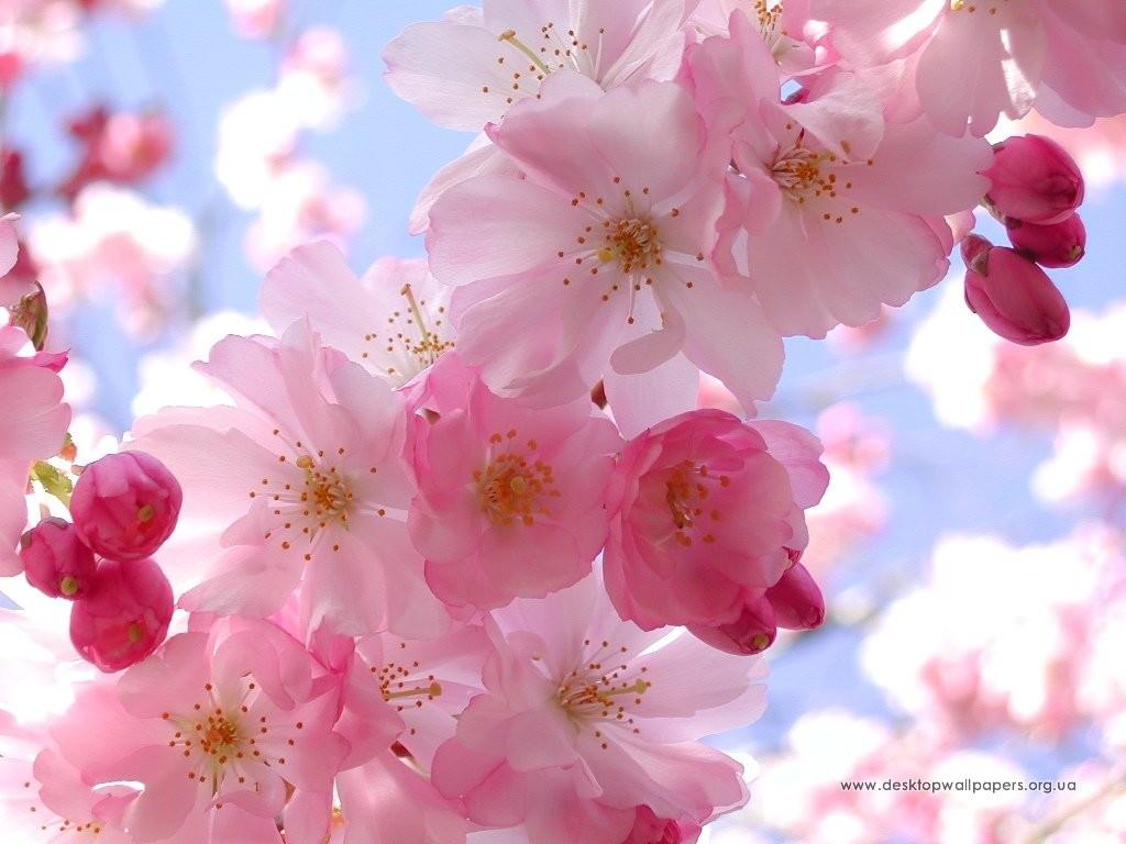flowers_134_1024x768_2_download-multimedia_com