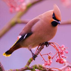kartinki24_birds_7854