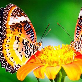kartinki24_ru_butterflies_80